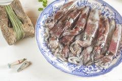Chocos frescos que pescam recentemente Fotografia de Stock