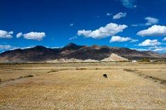 Chode di Palkor sul Tibet Fotografie Stock Libere da Diritti