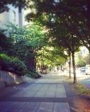 Chodniczek wzdłuż ulicy pod drzewami w Vancouver, Kanada Zdjęcia Royalty Free