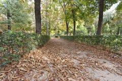 Chodniczek z jesień liść zdjęcie stock