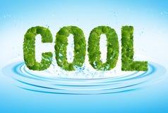 Chłodno słowo liście mennica, mentol, na świeżej wodzie Fotografia Stock