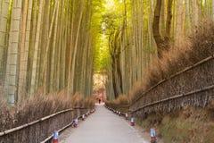 Chodząca ścieżka prowadzi bambusowy Arashiyama bambusa las Zdjęcie Stock
