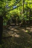 Chodząca ścieżka przez lasu tropikalnego Zdjęcia Royalty Free