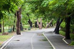 Chodząca ścieżka w parku po deszczu Zdjęcia Stock