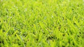 chodząca trawy kobieta zdjęcie wideo
