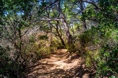 Chodzące ścieżki Porquerolles wyspa, Cote d «Azur, Francja zdjęcia stock