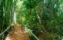 Chodzący ślad w Tajlandzkim tropikalnym lesie Zdjęcie Stock