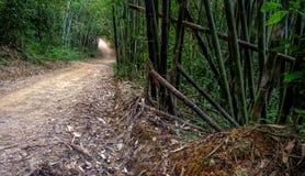 Chodzący ślad w Tajlandzkim tropikalnym lesie, Khao Sok park narodowy, Tajlandia Zdjęcia Stock