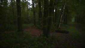 chodzący drewna zbiory wideo