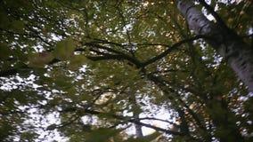 chodzący drewna zdjęcie wideo