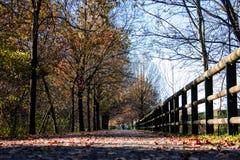 Chodzący sposób w parku w jesieni zdjęcia stock
