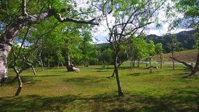 Chodzący widok w parku zdjęcie wideo