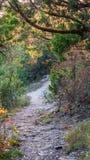 Chodzący wlec w lasu parku z wibrującymi zielonymi drzewami i roślinności spokojnych, spokojnych, pokojowych, zdjęcie royalty free