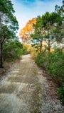 Chodzący wlec w lasu parku z wibrującymi zielonymi drzewami i roślinności spokojnych, spokojnych, pokojowych, zdjęcia royalty free