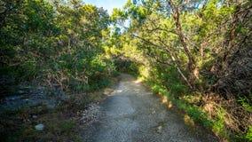 Chodzący wlec w lasu parku z wibrującymi zielonymi drzewami i roślinności spokojnych, spokojnych, pokojowych, obrazy stock