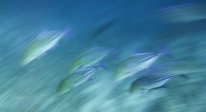 chodzenie szybka rybia szkoła fotografia stock