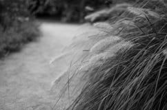 chodzenie w ogrodzie Obraz Royalty Free