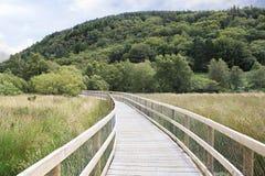 Chodzić ślada w Wicklow gór parku narodowym Obraz Royalty Free