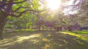 Chodzić pod drzewami w miasto parku zielonym gazonem na lato słonecznym dniu zbiory