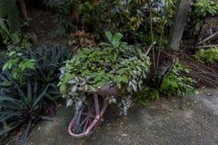 Chodzić rośliny obrazy royalty free