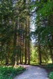 Chodzić wśród drzew Obrazy Stock