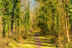 Chodzić w dół las ścieżkę w lecie zdjęcia stock