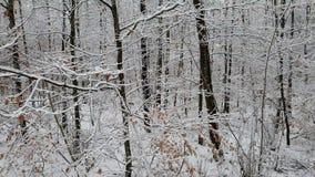 Chodzić w zima lesie podczas opad śniegu zdjęcie wideo