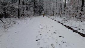 Chodzić w zima lesie podczas opad śniegu zbiory wideo