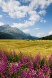 Chodzić wokoło Sils jeziora Szwajcaria - Górna Engadine dolina - Fotografia Royalty Free