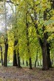 Chodzić przez jesieni miasta Fotografia Stock