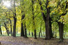 Chodzić przez jesieni miasta Fotografia Royalty Free