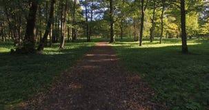 Chodzić przez obfitolistnego parka along trailway zbiory