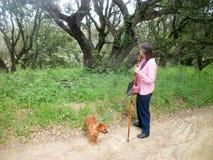 Chodzić psa Zdjęcie Stock