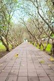 Chodzi sposób pod Lelawadee drzewem przy Nan prowincją, Tajlandia Zdjęcia Royalty Free