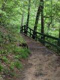 Chodzić w drewnach Zdjęcie Stock