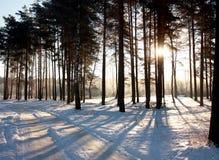 Chodzi w drewnach na mroźnym Stycznia ranku obraz stock