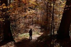 Chodzić w las Obrazy Stock