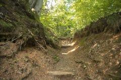 Chodzić w lesie Zdjęcia Stock