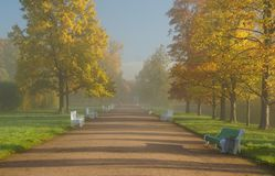 Chodzić w mglistym ranku parku Zdjęcie Royalty Free