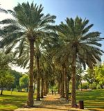 Chodzić W parku Obraz Royalty Free