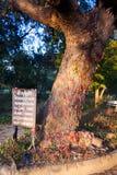 Choeung Ek杀害领域,在金边附近,柬埔寨 免版税库存照片
