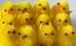 Choeur des poulets de Pâques Photo stock