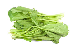Choi Sum Royalty Free Stock Photos
