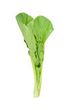 Choi Sum Royalty Free Stock Photo