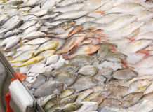 Choice of Assorted Fishes in Wet Market. Choice of assorted fresh fishes iced for sale in wet market seafood stall Royalty Free Stock Photo