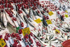 Choice of fish at a market Royalty Free Stock Photography
