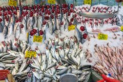 Choice of fish at a market in Istanbul Royalty Free Stock Photos
