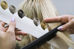 Choice of tone of hair in hair salon. Hairdresser chooses tone of hair swatches stock photos