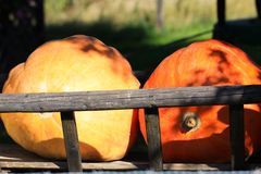 Choice of yellow and red pumpkins in different sizes and shapes decorated on a cart in bright autumn light - Netherlands. Choice of yellow and red pumpkins in royalty free stock image