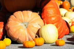 Choice of yellow and red pumpkins in different sizes and shapes decorated on a cart in bright autumn light - Netherlands. Choice of yellow and red pumpkins in royalty free stock photography